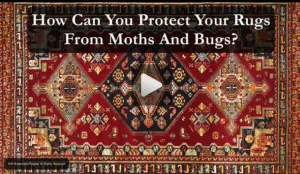 How Can You Protect Your Rugs From Moths And Bugs?