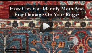 How Can You Identify Moth And Bug Damage On Your Rugs?